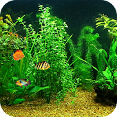 Fish Tank HD Live Wallpaper