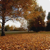 Falling Leaves Live Wallpaper2