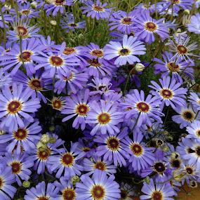 Happy flower by Vaibhav Nahar - Flowers Flower Gardens