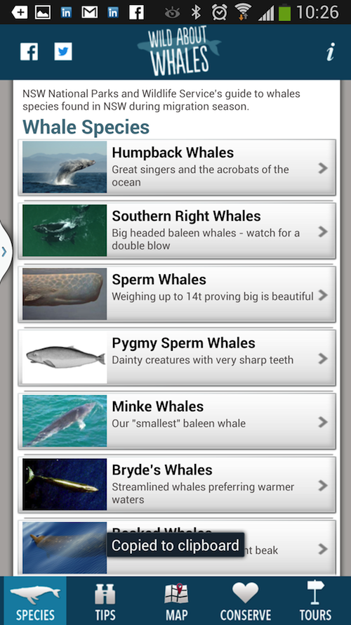 Whales NSW - screenshot