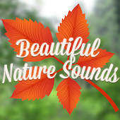 Beautiful Nature Sounds