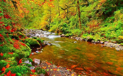 Nature live wallpapers android apps auf google play - Nature wallpaper apk ...