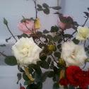 white roses.!