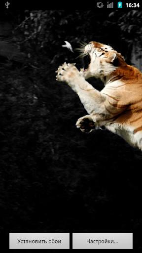 Wild Cats HQ Live Wallpaper