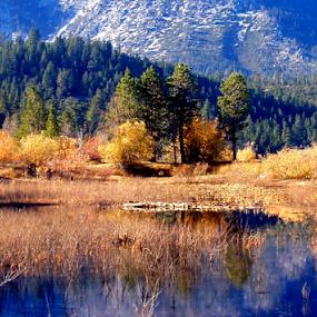Lake Tahoe by Tatiana Syunyaeva - Landscapes Forests ( water, reflection, grass, reflections, lake, forest, yellow, landscape, mountains, lake_tanoe, nature, blue, fall, trees )