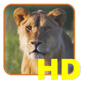 Safari List HD - East Africa