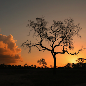 The Craggy Tree by Diane Hallam - Landscapes Sunsets & Sunrises ( australian, sunset, australia, outback, landscape, craggy tree,  )