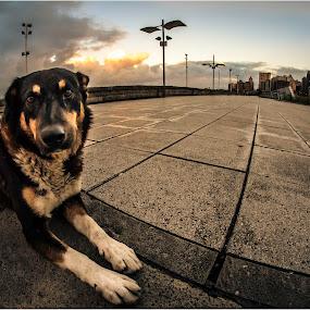 My street friend by Sergio Moya - Animals - Dogs Portraits ( building, sunset, street, sunrise, dog, landscape, animal, #GARYFONGPETS, #SHOWUSYOURPETS )