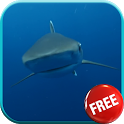 Shark Video Live Wallpaper icon