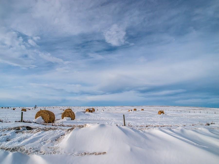 Alberta winter Fields by Gail Jones McMartin - Landscapes Prairies, Meadows & Fields ( blue sky, winter, alberta, hay bales, snow, drifting snow )