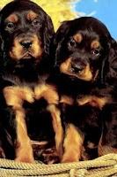 Screenshot of Dog Twins Puzzle