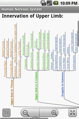 Human Nervous System Study Gui- screenshot