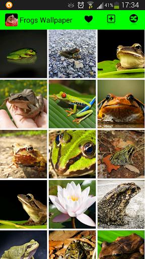 Frog Wallpapers