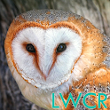 free live owl wallpaper icon
