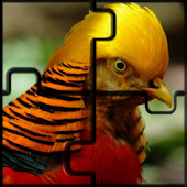 Birds, Lions - Animal Jigsaw