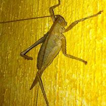 Guatemala Fauna