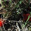 Crimson slime mold.