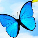 Butterflies In Flight Live Wal logo