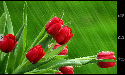 Beautiful Flowers Wallpapers screenshot 10
