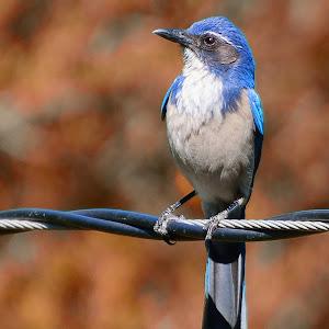 bird0122.jpg