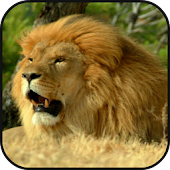 lion lite escape