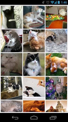 私は猫が大好き