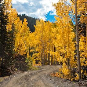 Colorado Forest Road by David Short - Landscapes Forests ( mesa, delta, fall, colorado, aspen )