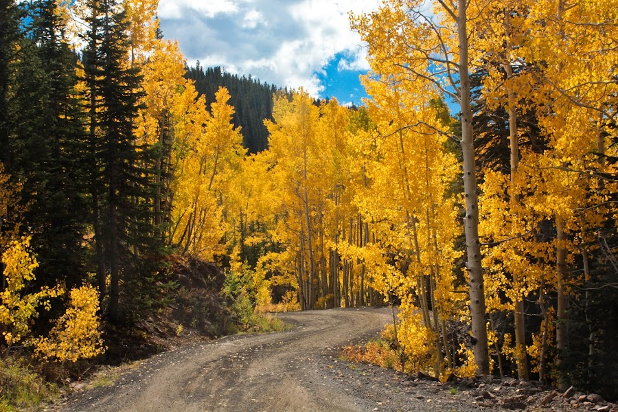 Colorado Forest Road by David Short - Landscapes Forests ( mesa, delta, fall, colorado, aspen )