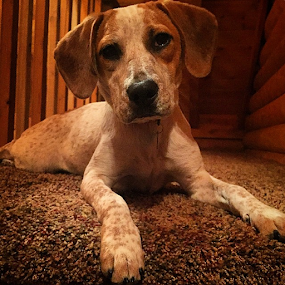 Piper chillin' on the steps... by Chuck Hagan - Instagram & Mobile iPhone (  )