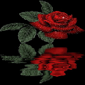 Reflective Red Rose Live Wall icon