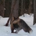 Red Fox / Cross Phase Fox