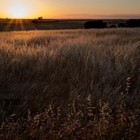 Extremadura #1 by Marsilio Casale - Landscapes Prairies, Meadows & Fields