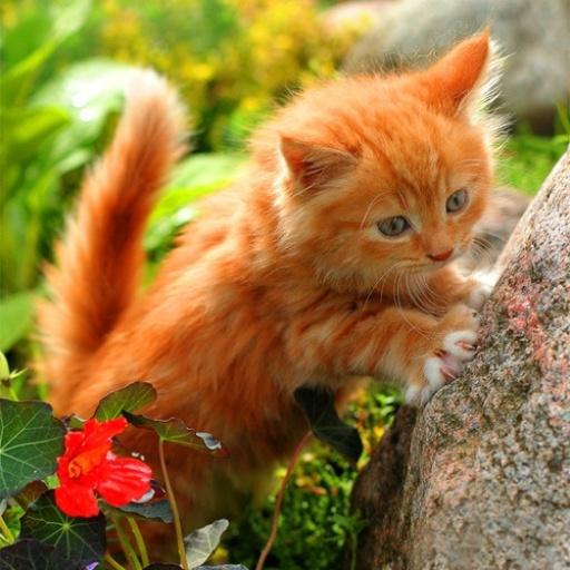 Jengibre gatito Steep es 1 個人化 App LOGO-APP試玩