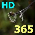 Kinh Thánh 365 HD