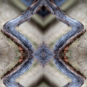 Mirrored Branch by Shaun Schlager - Abstract Patterns ( mirror, abstract, patterns, tree, grass, branch )