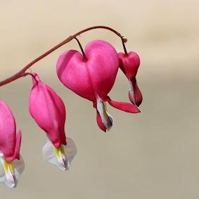 Touch by Maureen Rueffer - Flowers Flower Gardens (  )