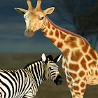Click! Safari icon