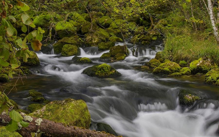 The source of the stream Gljun by Jože Borišek - Landscapes Waterscapes ( bovec-slovenia )