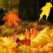 Autumn Live Wallpaper