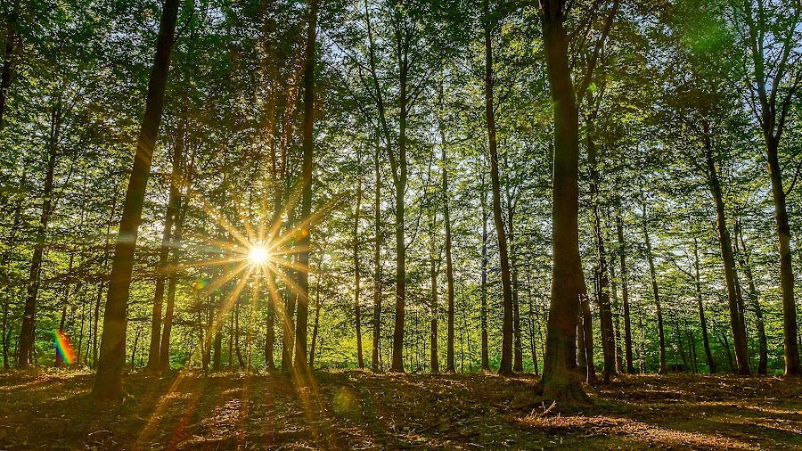 Nature is our Protector  by Awais Khalid - Landscapes Forests ( forests, jungle, trees, sun, rays, save the forests worldwide )