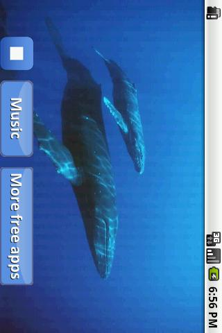 【免費音樂App】睡覺的鯨魚歌曲-APP點子