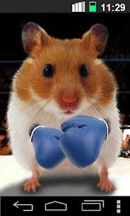 Funny Hamster Cracked Screen- screenshot thumbnail