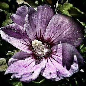 Purple Flower looking for Shadow by Nat Bolfan-Stosic - Flowers Flower Gardens ( looking, purple, shadow, garden, flower,  )