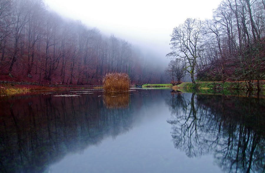Misty lake by Zoran Rudec - Landscapes Waterscapes ( reflection, fog, lake, forest )