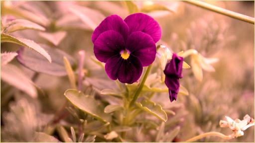 【免費娛樂App】鮮花圖片-APP點子
