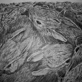 cottontail bunnies by Cindy Swinehart - Drawing All Drawing ( babies, rabbits, nest, bunnies, young, mammal )