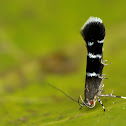 Cosmet moth