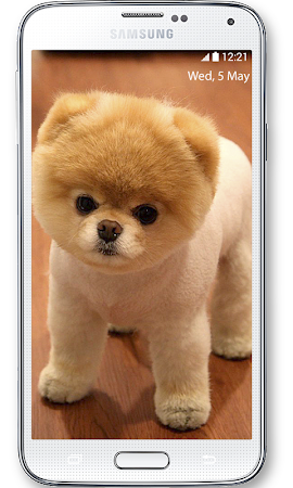 Boo Cutest Dog Wallpaper 1 3 Apk Free Personalization Application