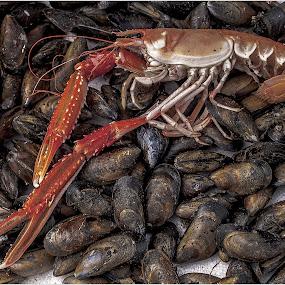 muscle me langoustine by Sandy Crowe - Food & Drink Ingredients ( langoustine, shrimp, seafood, muscle, sea,  )