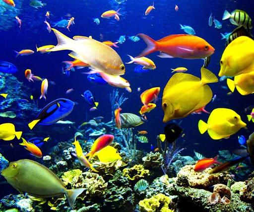 3D Underwater World